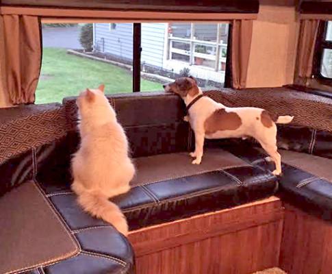 น้องหมา-น้องแมว ทดลองออกแคมป์ปิ้งหลังบ้าน