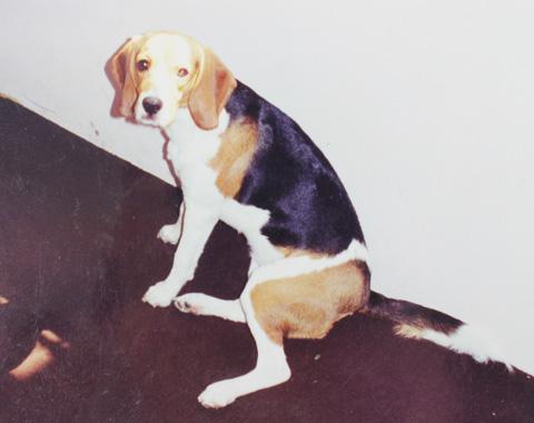 My Dog Peggy (R.I.P)
